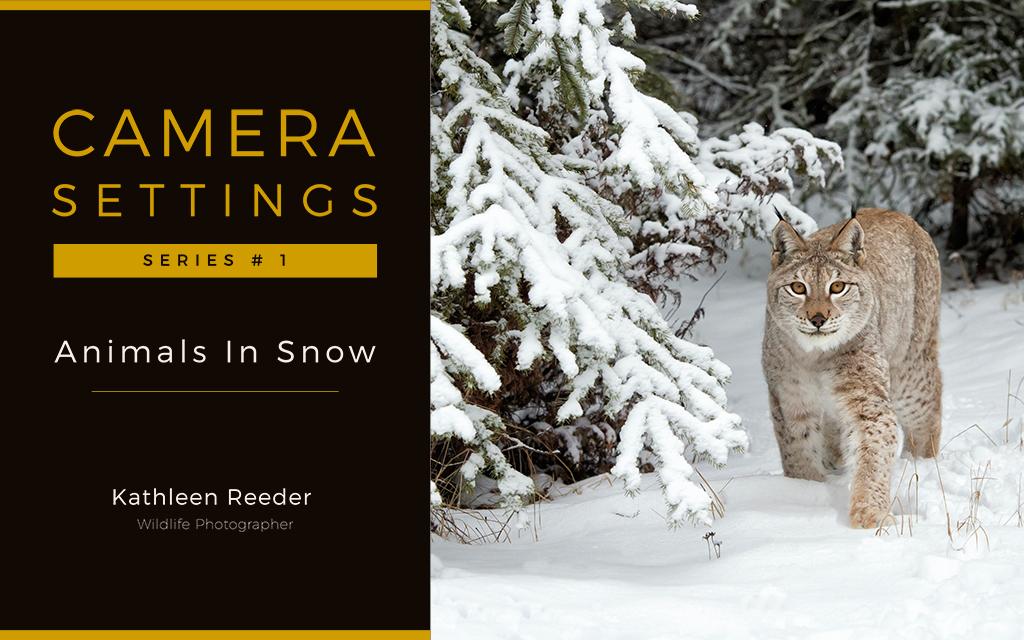 Ebooks and print books kathleen reeder wildlife photographer purchase on amazon fandeluxe Gallery