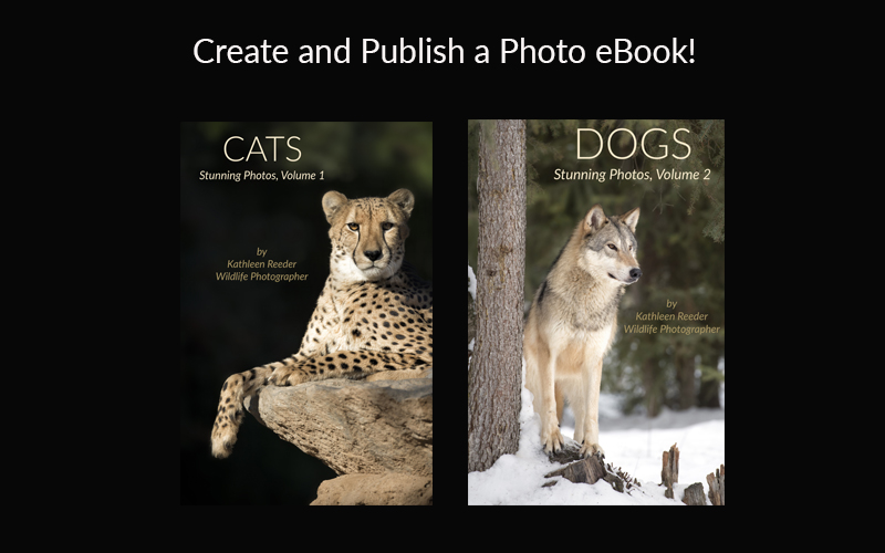 Ebooks and print books kathleen reeder wildlife photographer create and publish your ebook fandeluxe Gallery